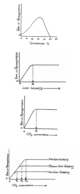 how does temperature affect respiration rates